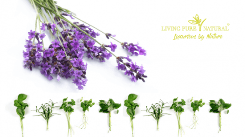 Living Pure Natural skin care natural organic herbs flowers